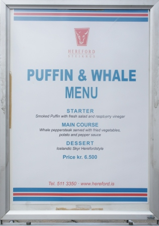 Puffin and whale!