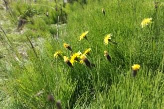 Random mountain flowers
